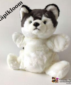 Kutsu - käpikloom Husky